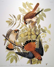 Load image into Gallery viewer, Closer view of Abbeville Press Audubon limited edition lithograph of pl. 142 Sparrow Hawk