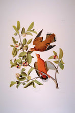 Load image into Gallery viewer, Full sheet view of Abbeville Press Audubon limited edition lithograph of pl. 162 Zenaida Dove