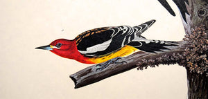 Detail view of Amsterdam Audubon limited edition lithograph of pl. 416 Ten Woodpeckers