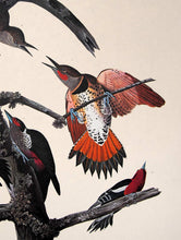 Load image into Gallery viewer, Detail view of Amsterdam Audubon limited edition lithograph of pl. 416 Ten Woodpeckers