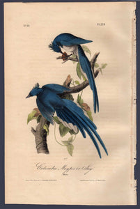Full Sheet View of Audubon Octavo Plate 229 Columbia Magpie or Jay