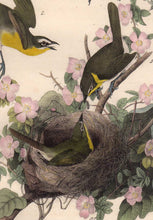 Load image into Gallery viewer, Detail view of Audubon Octavo Plate 244 Yellow-Breasted Chat