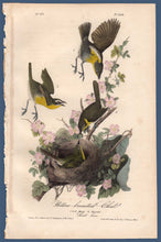 Load image into Gallery viewer, Full size view of Audubon Octavo Plate 244 Yellow-Breasted Chat