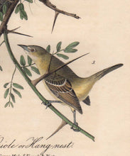 Load image into Gallery viewer, Detail view of Audubon Octavo Plate 219 Orchard Oriole