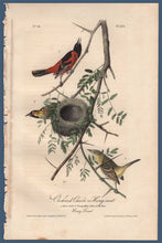 Load image into Gallery viewer, Full sheet view of Audubon Octavo Plate 219 Orchard Oriole