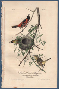 Full sheet view of Audubon Octavo Plate 219 Orchard Oriole