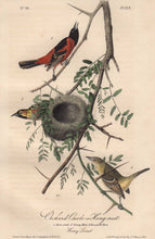 Load image into Gallery viewer, Closer view of Audubon Octavo Plate 219 Orchard Oriole