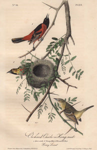 Closer view of Audubon Octavo Plate 219 Orchard Oriole