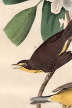 Load image into Gallery viewer, Detail view of Audubon Octavo 1840 First Edition Plate 72 Canada Flycatcher