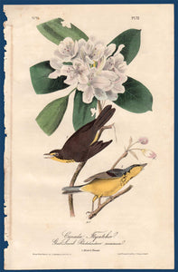 Full sheet view of Audubon Octavo 1840 First Edition Plate 72 Canada Flycatcher