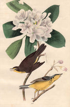 Load image into Gallery viewer, Closer view of Audubon Octavo 1840 First Edition Plate 72 Canada Flycatcher