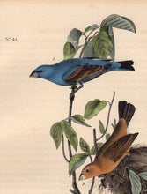 Load image into Gallery viewer, Detail view of Audubon Octavo 1840 First Edition Plate 204 Blue Long Grosbeak