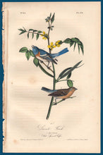 Load image into Gallery viewer, Full sheet view of Audubon Octavo 1840 First Edition Plate 171 Lazuli Finch