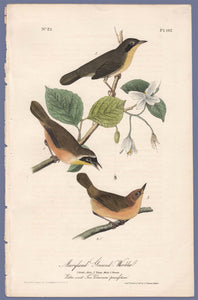Audubon First Edition Octavo Prints for sale Pl 102 Maryland Ground Warbler, full sheet