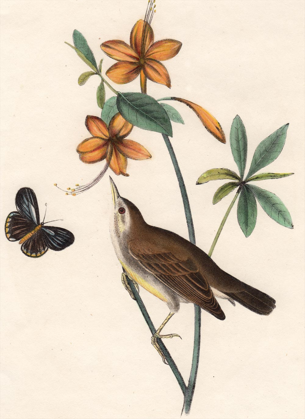 Audubon First Edition Octavo Print for sale Pl 104 Swainson's Swamp Warbler, detail