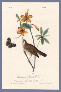 Audubon First Edition Octavo Print for sale Pl 104 Swainson's Swamp Warbler, full sheet
