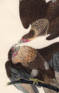 Audubon First Edition Octavo Print for sale plate 4 Caracara Eagle, detail