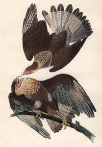 Audubon 1840 First Edition Octavo Print for sale plate 4 Caracara Eagle, closer view