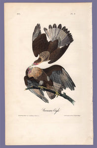Audubon 1840 First Edition Octavo Print for sale plate 4 Caracara Eagle, full sheet