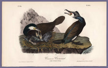 Load image into Gallery viewer, Audubon Octavo Print, plate 415 Common Cormorant, 1840 First Edition, full sheet