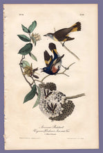 Load image into Gallery viewer, Audubon Octavo Print 68 American Redstart 1840 First Edition, full sheet