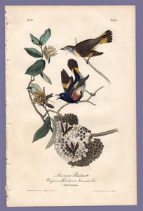 Audubon Octavo Print 68 American Redstart 1840 First Edition, full sheet