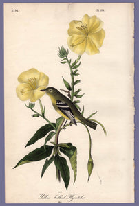 Audubon Octavo Print 490 Yellow-Bellied Flycatcher 1840 First Edition, full sheet