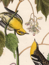 Load image into Gallery viewer, Audubon Octavo Print 83 Hemlock Warbler 1840 First Edition, detail