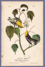 Load image into Gallery viewer, Audubon Octavo Print 83 Hemlock Warbler 1840 First Edition, full sheet