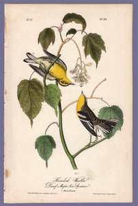 Audubon Octavo Print 83 Hemlock Warbler 1840 First Edition, full sheet