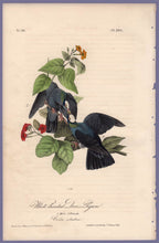 Load image into Gallery viewer, Audubon Octavo Print 280 White-Headed Dove or Pigeon 1840 First Edition, full sheet