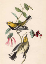 Load image into Gallery viewer, Audubon Octavo Print 84 Black-Throated Green Warbler, 1840 First Edition, detail