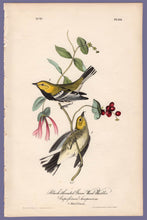 Load image into Gallery viewer, Original Audubon Octavo Print 84 Black-Throated Green Warbler, 1840 First Edition, full sheet