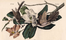 Load image into Gallery viewer, Audubon Octavo Print 276 Black-Billed Cuckoo, 1840 First Edition, detail