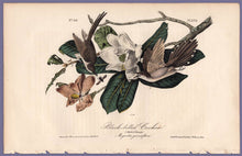 Load image into Gallery viewer, Audubon Octavo Print 276 Black-Billed Cuckoo, 1840 First Edition, full sheet