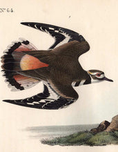 Load image into Gallery viewer, Audubon Octavo Print 317 Kildeer Plover, 1840 First Edition, detail
