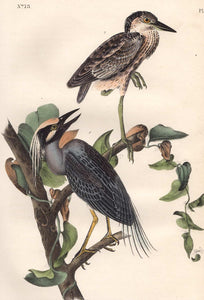 Audubon Octavo Print 364 Yellow Crowned Night Heron, detail