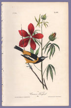 Load image into Gallery viewer, Audubon 1840 First Edition Royal Octavo Print 499 Common Troupial, full sheet