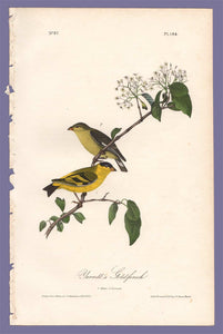 Audubon 1840 First Edition Royal Octavo Print 184 Yarrell's Goldfinch, full sheet