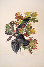 Load image into Gallery viewer, Audubon Amsterdam Print for sale Pl 107 Canada Jay, full sheet