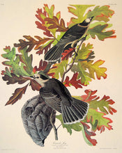 Load image into Gallery viewer, Audubon Amsterdam Print for sale Pl 107 Canada Jay, plate