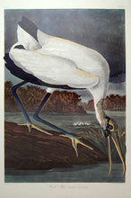 Load image into Gallery viewer, Audubon Amsterdam Print for sale Plate 216 Wood Ibis, full sheet view