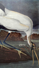Load image into Gallery viewer, Audubon Amsterdam Print for sale Plate 216 Wood Ibis, closer view