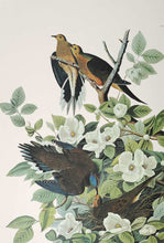 Load image into Gallery viewer, Aububon Princeton Print Carolina Turtle Dove - detail