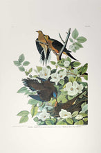 Load image into Gallery viewer, Aububon Princeton Print Carolina Turtle Dove - full sheet