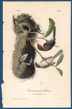 Load image into Gallery viewer, Audubon Octavo Print First Edition for sale Pl 130 Chestnut Crowned Titmouse, full sheet