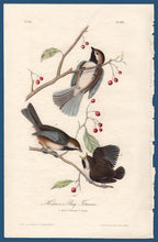 Load image into Gallery viewer, Audubon Octavo Print First Edition for sale Pl 128 Hudson's Bay Titmouse, full sheet