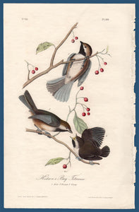 Audubon Octavo Print First Edition for sale Pl 128 Hudson's Bay Titmouse, full sheet