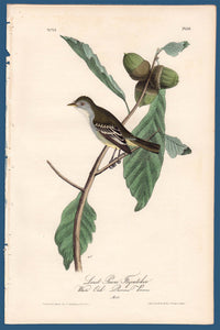 Audubon First Edition Octavo Print for sale Pl 66 Least Pewee Flycatcher, full sheet