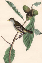 Load image into Gallery viewer, Audubon First Edition Octavo Print for sale Pl 66 Least Pewee Flycatcher, closer view